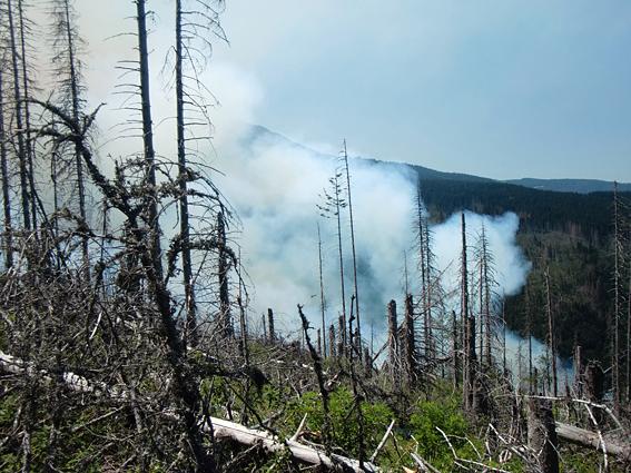 пожар в Бистришко бранище