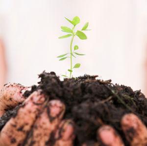 предимства на био продуктите